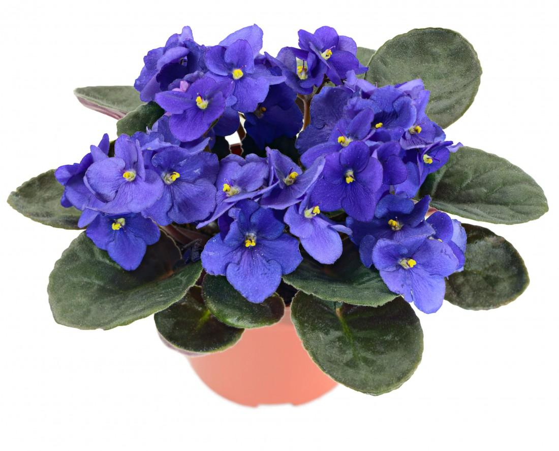Светодиодная фитоподсветка для рассады и цветов