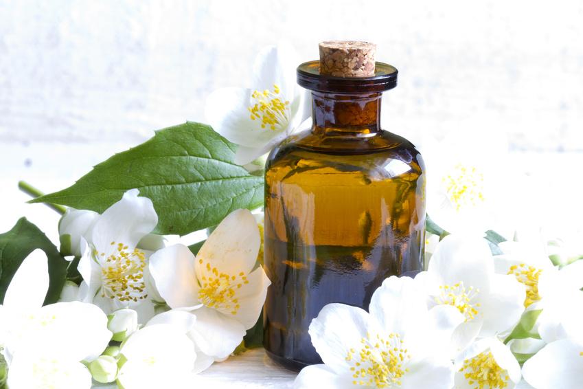 Масло жасмина свойства и применение