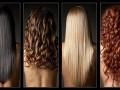 Строение волос и виды
