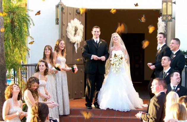Свадебный салют из бабочек