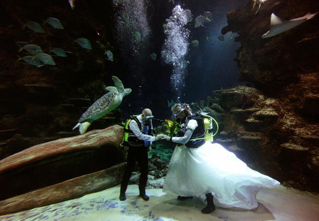 Свадьба 2012 под водой на мальдивских островах