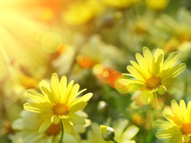 Выбор парфюмерии и ароматов по знаку зодиака - стихия земли