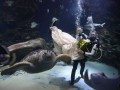 Свадебная подводная одиссея