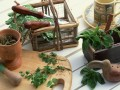 Пряные травы в кулинарии