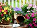Комнатные цветы, что должны быть в каждом доме