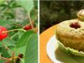Маффины с ягодами – быстро, вкусно, полезно