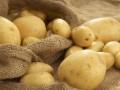Что приготовить из молодой картошки – рецепты