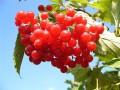Осенние ягоды. Рецепты из осенних ягод