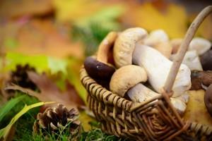 вкусные грибы