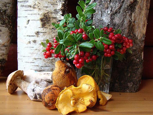 блюда из грибов