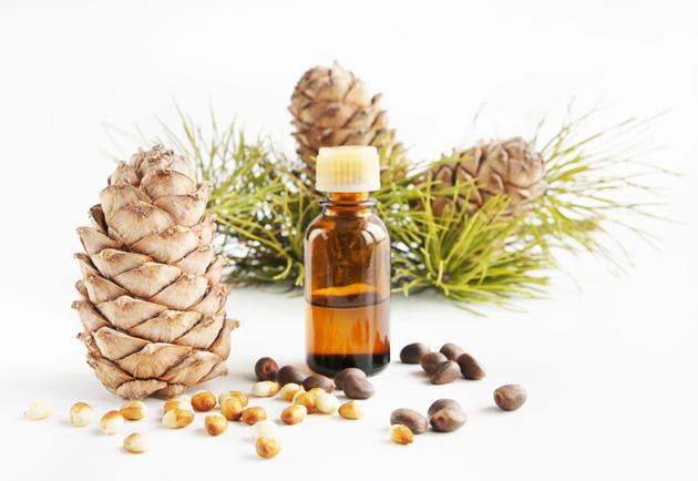 Кедровое масло и живица применение