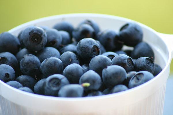 Ягода голубика: фото, состав, калорийность, польза и лечебные свойства, противопоказания