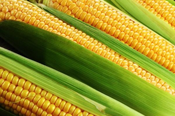 Кукуруза маис