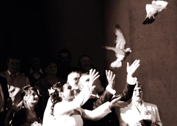 голуби на свадьбе фото