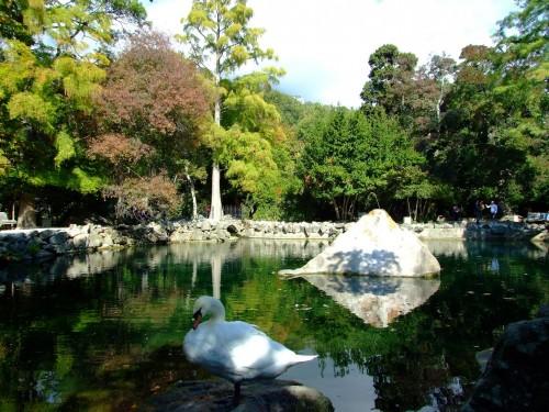Крымские парки